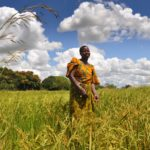 Transforming agriculture is transforming Africa