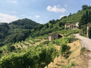 Impeccable Italy : The Prosecco Region
