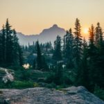 10 promising European forestry tech startups to watch in 2020