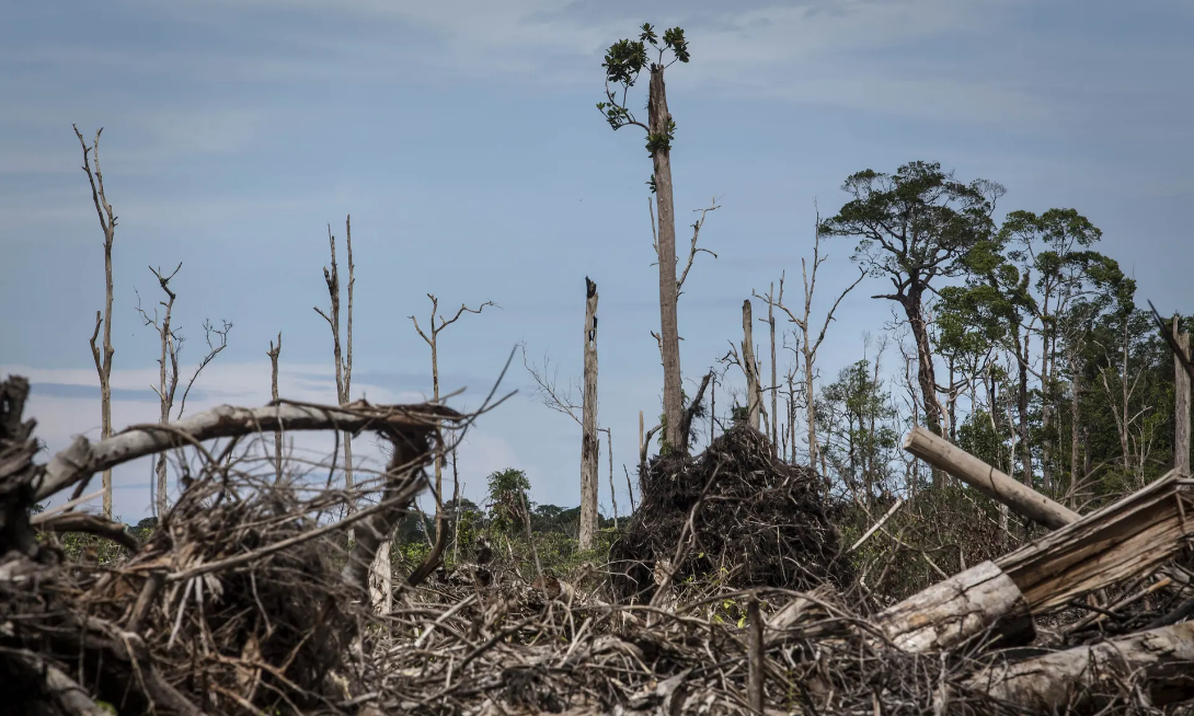 Banks lent $2.6tn linked to ecosystem and wildlife destruction in 2019 – report
